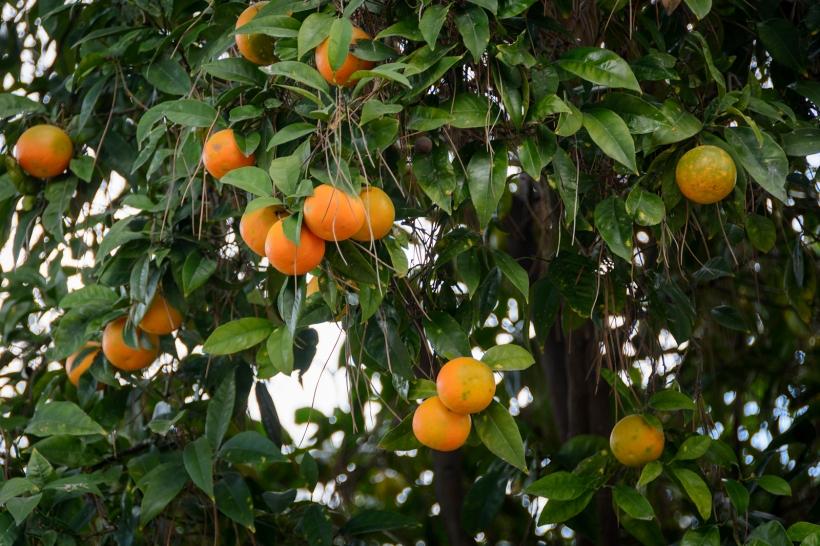 Apelsinträdgården_3