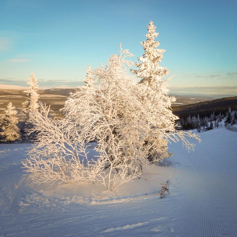 20170123_dscn0326_rimfrost