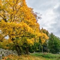144 Höstdag/Autumn day (249/365)