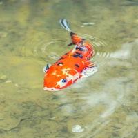 Eget tema 24 - Som fisken i vattnet (276/365)