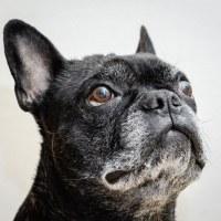 111 Hundporträtt (3/365)