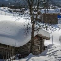 275 Spår i snön (78/365)