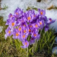 117 I full blom (93/365)