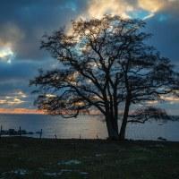207 När solen går ner (36/365)