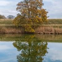 116 Hösten är på väg (302/365)