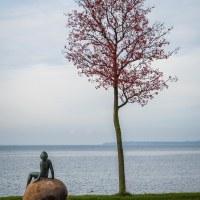 Eget tema 41 - Flickan och trädet (330/365)