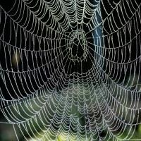 223 På en liten spindeltråd (336/365)