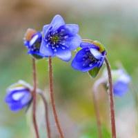 24 Blå blomma (75/365+1)