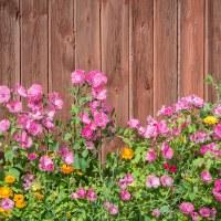 114 Höstens sista blomma (301/365+1)