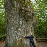 80 Flickan och trädet (291/365+1)