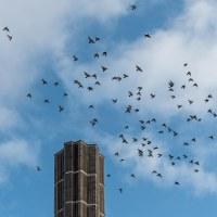 Eget tema 26 - Flock (307/365+1)