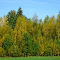 97 Guld och gröna skogar (235/365)